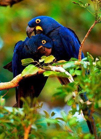 Pantanal, Brasil.
