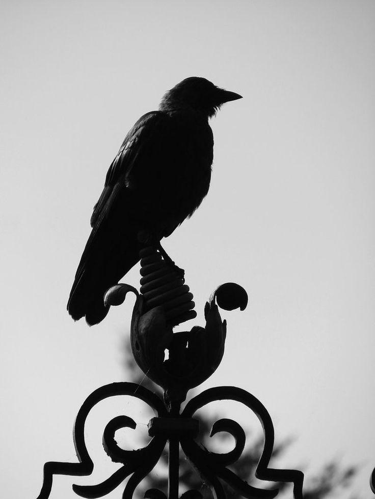 Картинка ворона с надписью, надписями про