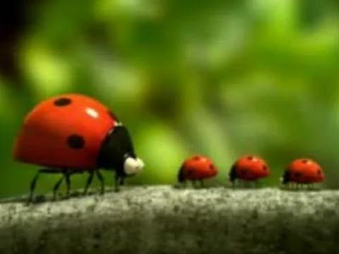 Minuscule - The ladybug - YouTube. I LOVE that series.