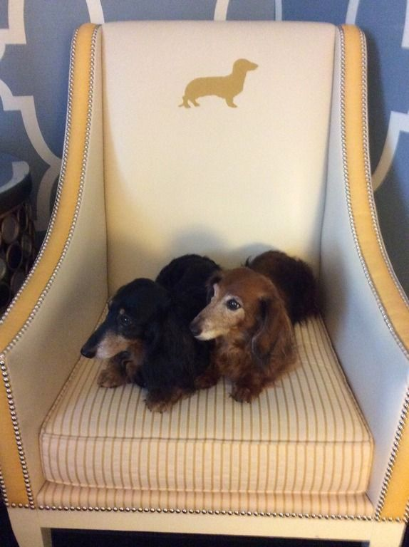 A Of Dachshunds Sitting In Chair That S Inspired By Them At Hotel Monaco Philadelphia Pet Friendly