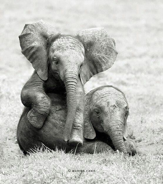 Image result for sweet elephant pic