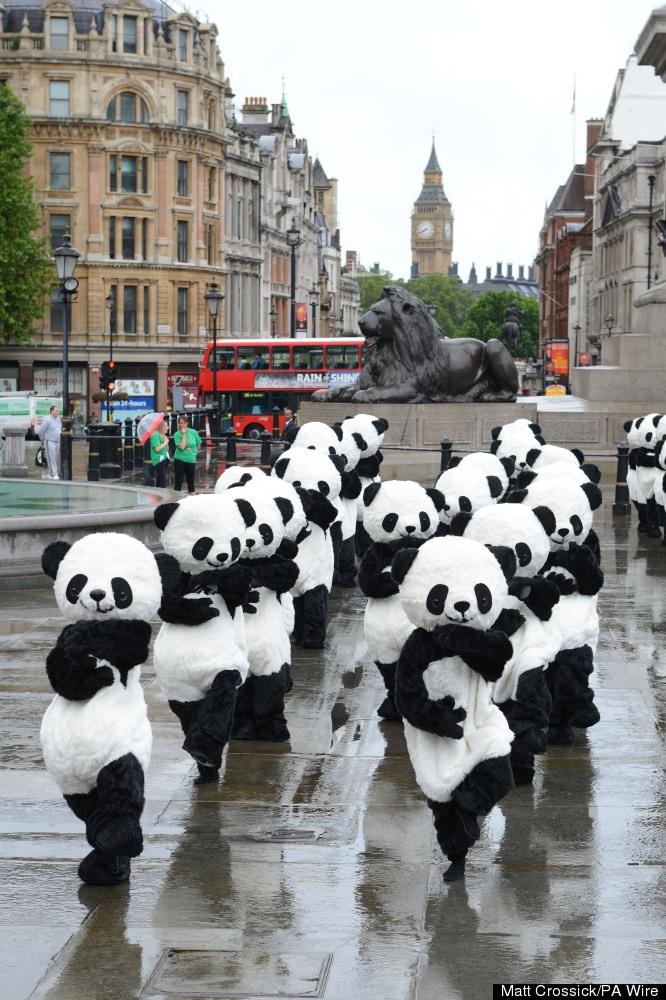 Pandas doing Tai Chi in Trafalgar Square for Panda Awareness Week 2012