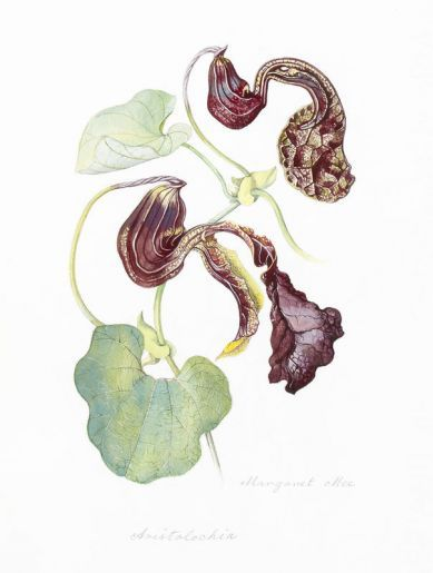 Henry Sotheran's - Natural History: Rarities