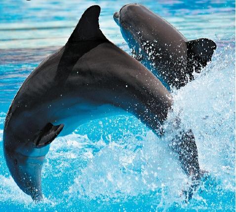 Dyrenes verden på Costa Blonca
