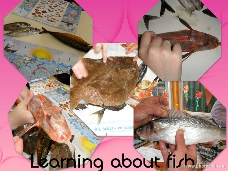 Workshop about FISH