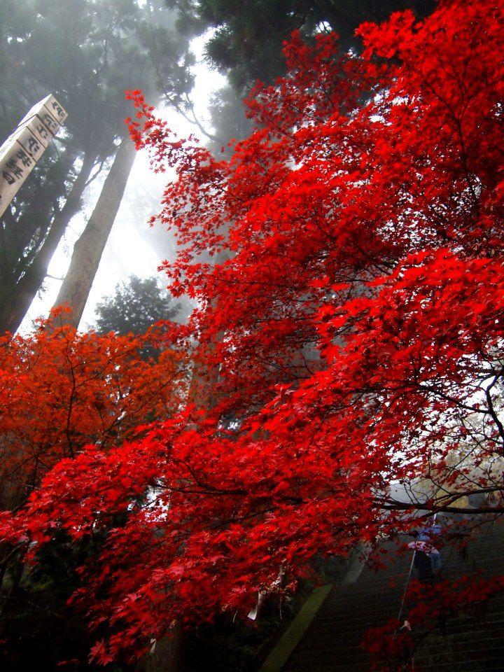 滋賀 延暦寺 東塔(Toutou-Enryakuji temple in Shiga,Japan)11/11撮影