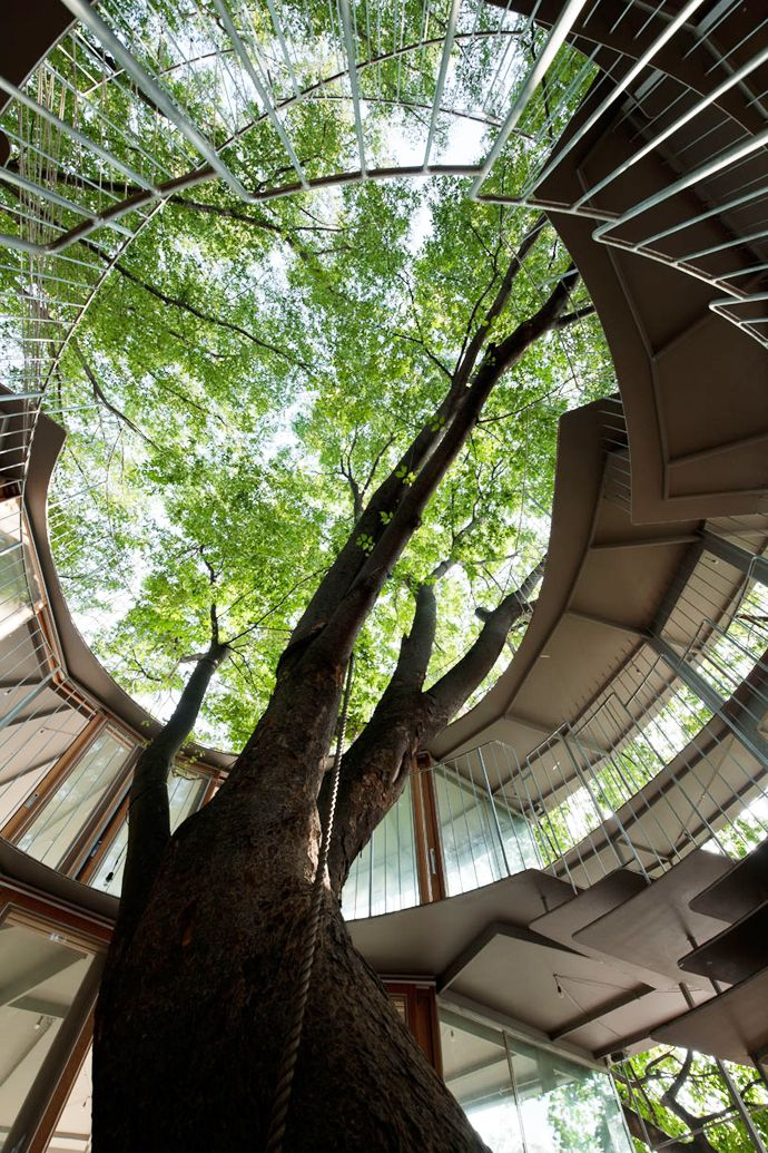 Ring Around a Tree by Tezuka Architects   DesignRulz.com