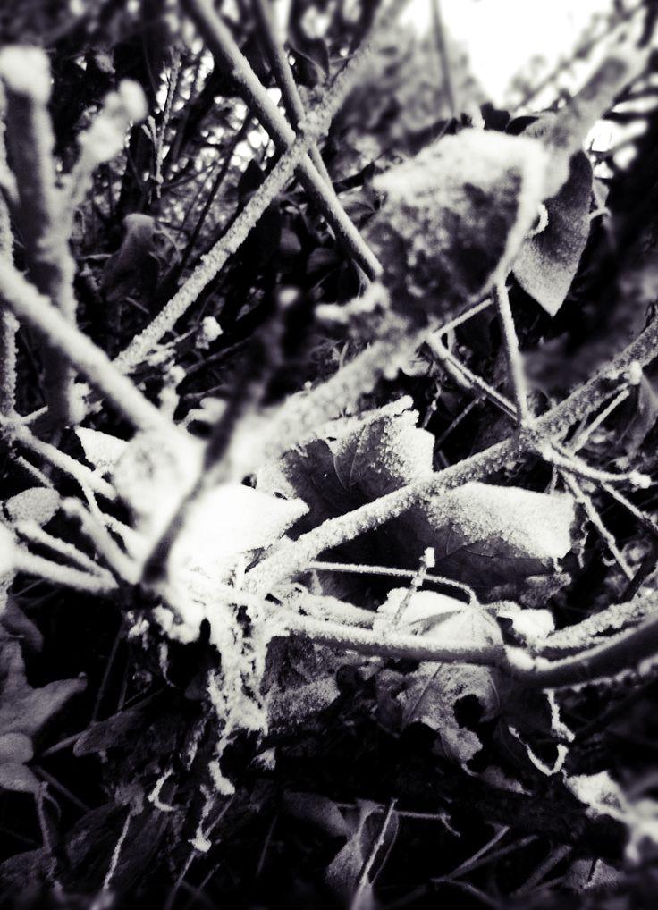 Winter   Photo: Beata Bauer