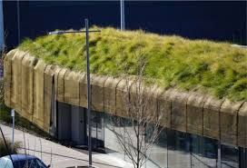 Image result for living roof auckland airport