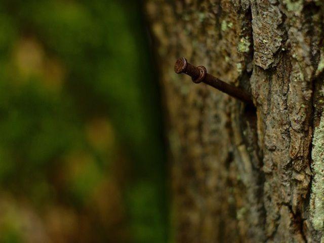 Belever egy szöget az élő fába! El nem tudod képzelni, hogy miért!