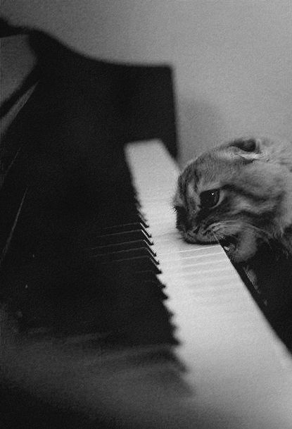 Two loves... Music & Animals