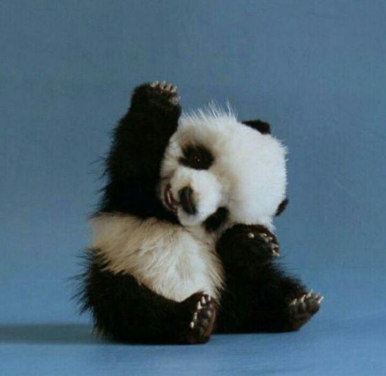 awww: Cutest Baby, Autism Awareness, Pandas Baby, High Five, Friends, Hands, Baby Animal, Baby Pandas Bears, Teacher