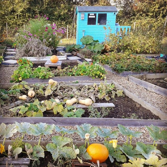 30 Best Images About Kitchen Gardening On Pinterest: 858 Best Allotments And Kitchen Gardens Images On