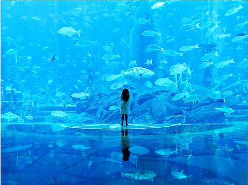 Dubai aquarium. I love aquariums.