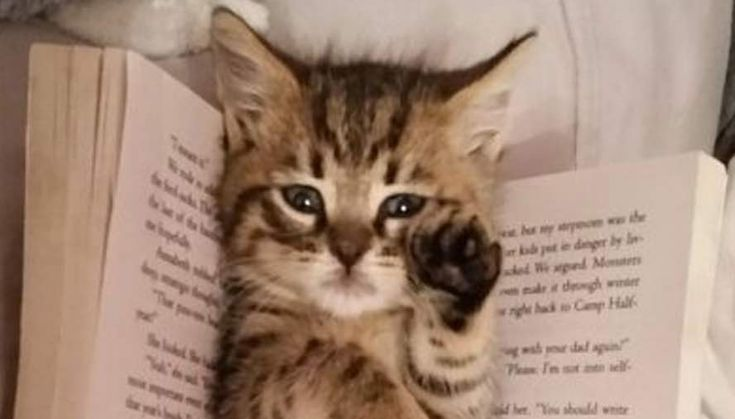 Favourite Bookmark - Click to see loads of great pictures of cats and kittens to brighten your day.