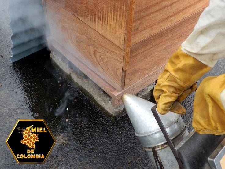 El ahumador es un aparato que se usa en la apicultura para calmar a las abejas. El hecho de que el humo tranquiliza a las abejas es conocido desde tiempos muy antiguos La Presentación de nuestra miel es de medio kilo pedidos: 3012020777 - 3117402833  ventas@mieldecolombia.com www.mieldecolombia.com Servicio a domicilio sin ningún costo en el area metropolitana http://mielcolombia.blogspot.com/