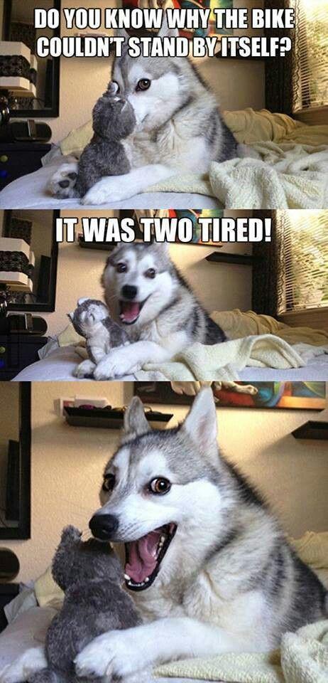 Husky telling jokes
