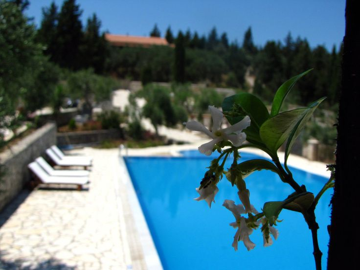 Villa Bella Vista,Paxos, Greece http://www.fougarostravel.com/el/paxos-diamoni.html