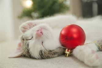 Make the holidays safe and happy for all, by catproofing your home.