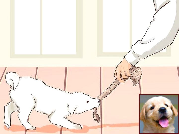 House Training A Dachshund Puppy And Clicker Training Dogs Youtube