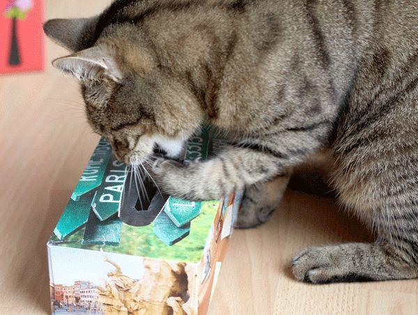 Katzenspielzeug DIY – Katzen