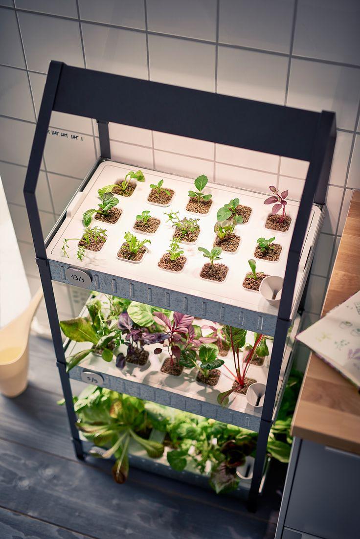 Избери семената, които искаш да посадиш и ги сложи в навлажнените цилиндри с растителна среда, а след това в оранжерия с капак VÄXER. http://www.ikea.bg/indoor-gardening/growing-cultivators/growing-kits/60726/87396/