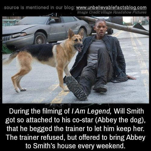 During The Filming Of I Am Legend Will Smith Got So Attached To