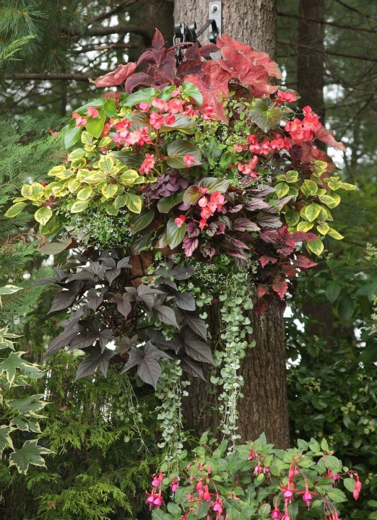 Flowers For Hanging Baskets In Part Shade : The best images about hanging baskets on