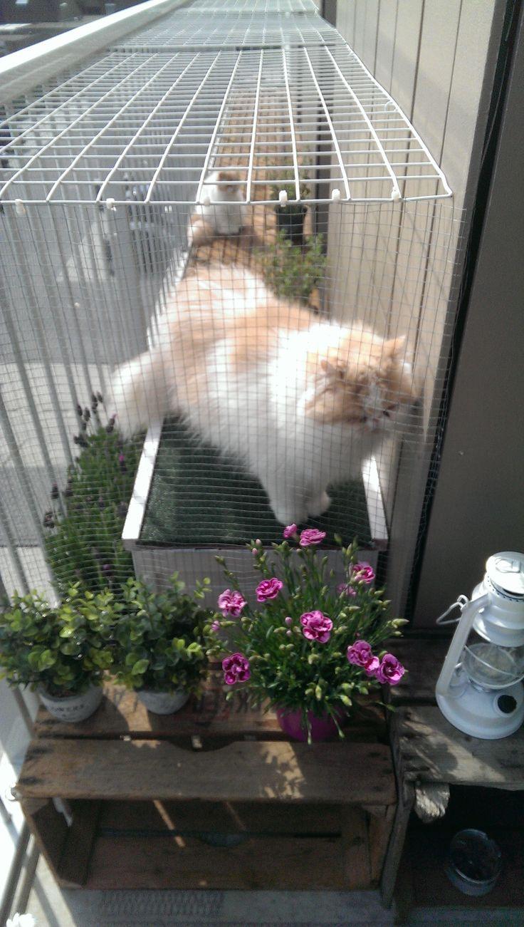 Apart afgeschermd balkon voor mijn katjes. Ik mag niet boven de reling uitkomen van de woningbouwvereniging, dus heb ik het zo gedaan. #cats #balcony #balkon #catproof