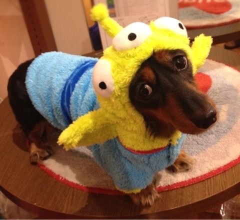 Dog in Toy Story Aliens Costume - The Dog Home