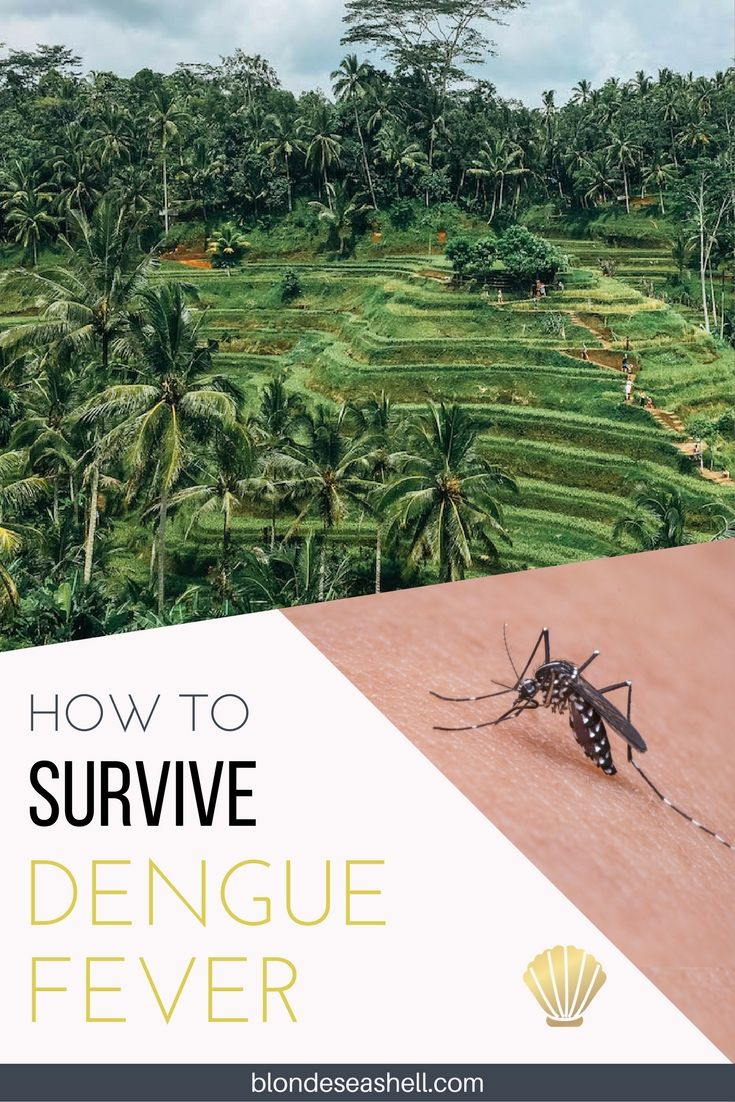 How to survive Dengue fever and how to PROTECT yourself from getting it