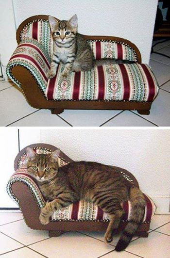 Kitten and cat on chaise longe