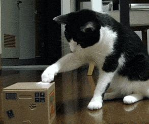 It's a gif. It moves. That's the point. Go to the page and look at it to see the joy of this. funny-gif-cat-toy-coin-box
