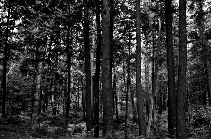 B&W Forest by Christopher Sauvageau on 500px