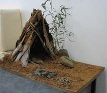 Myrtleford P12: aboriginal shelter