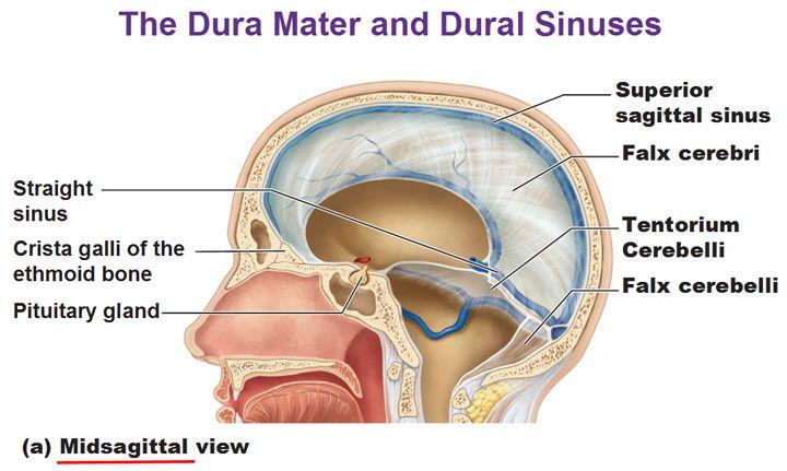Dura Mater Dural Sinuses Falx Cerebri Tantorium Cerebelli Falx Cristal Galli Midsagittal View