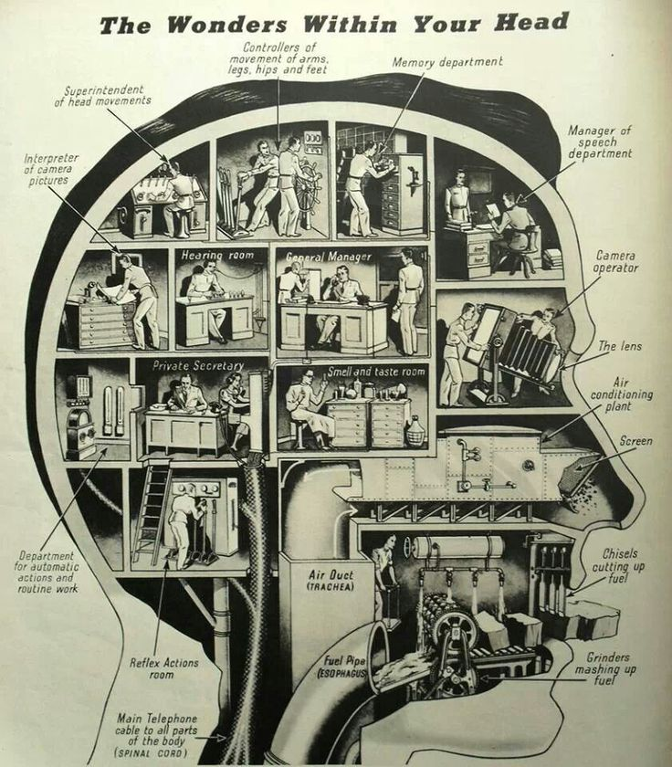 A beautiful example of the functionalities in our brains
