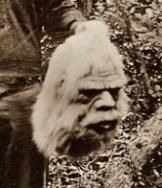 Bigfoot Head. More about the 1800's Bigfoot Hunters. Hmm. Did photographers follow them around while they hunted Bigfoot? How old does the head look? Maybe Bigfoot was around before we were. Follow Boondockers Landing Resort for more interesting, informative, and fun boards about Oklahoma and the southeast 'hot spot' region known as Choctaw Country. boondockerslanding.com