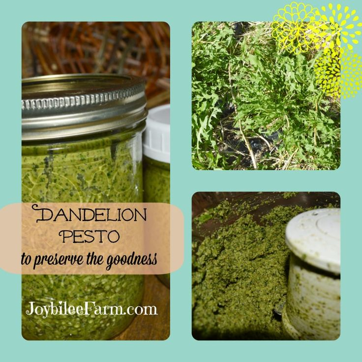 make dandelion pesto and save the goodness for later spring green ...