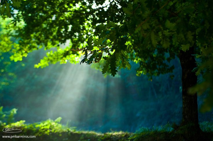 Light of Nature by Pedro M. Barreiros on 500px