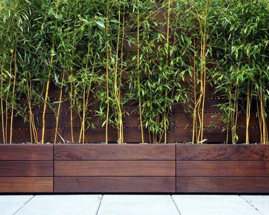 bambus holz kübeln pflanzen sichtschutz terrasse balkon