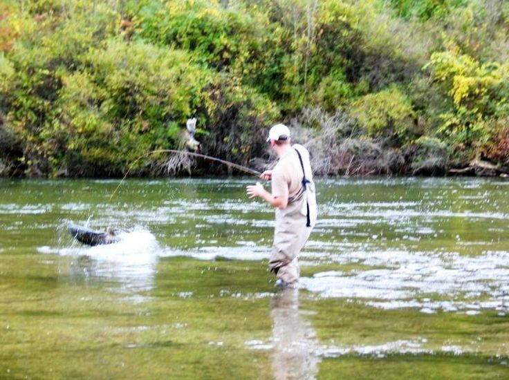 1000 Images About Salmon Steelhead Fishing Nw Michigan