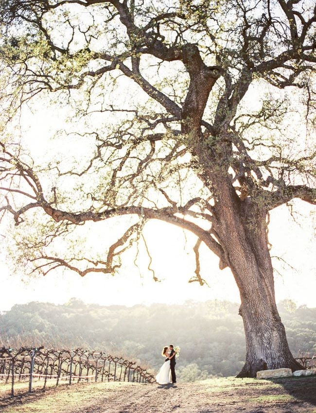 gorgeous tree shot from Danielle Poff Photography