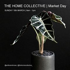 THE HOME COLLECTIVE Event SUNDAY 18th MARCH | 9am - 1pm  ANTLER and MOSS will have a pop-up stall at The Home Collective market day, along with loads of other exciting homeware stores. This market is designed purely for the home + garden lover. . There is a gold coin donation at the entrance, with funds going to the Animal Welfare League QLD.  175 Edinburgh Castle Rd  Wavell Heights Community Hall. Brisbane  antlerandmoss.com #supportinglocal #thehomecollective #australianceramics…
