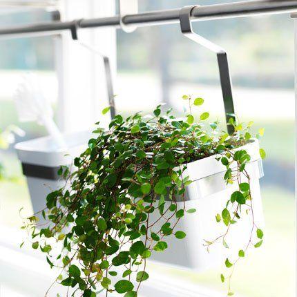 Des bacs à ustensiles de cuisine en guise de pots pour les aromatiques, le long d'une barre devant la fenêtre