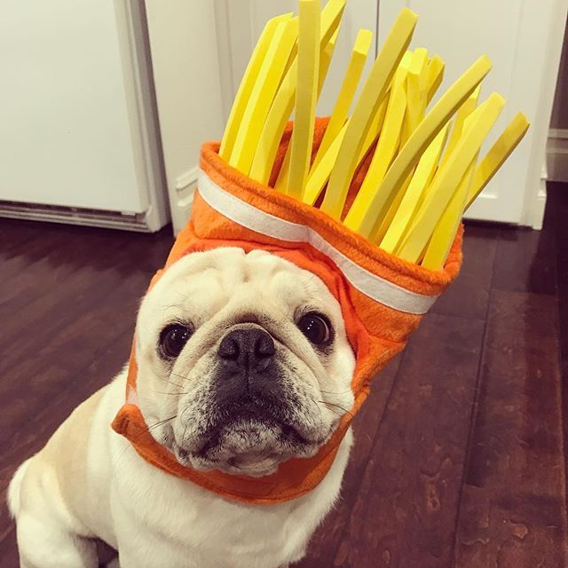 Gimme Those Fries Friyay Smushy Face Army White Pug