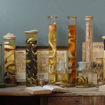 Avec Objet de Curiosité, le cabinet se transforme en atelier de sorcière avec ses fioles et autres tubes en verre, contenant des animaux reptiliens dans du formol, comme autant d'ingrédients pour quelques potions magiques.