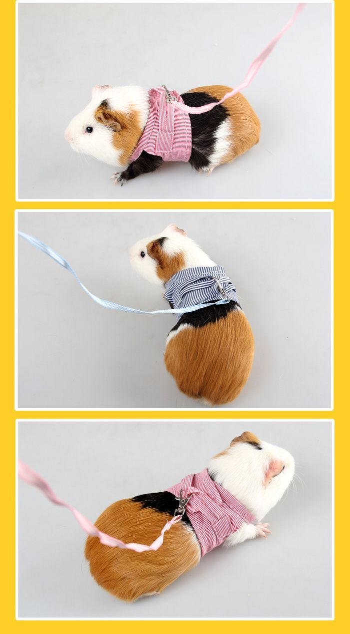 Pin On Guinea Pig Supplies Wholesale