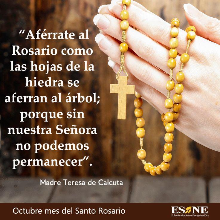 17 mejores ideas sobre rosario misionero en pinterest for Viveros en rosario