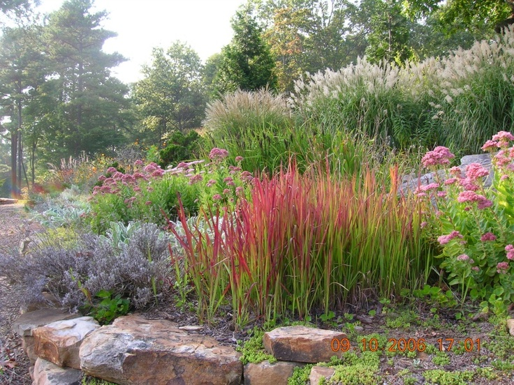 112 best planting with ornamental grasses images on for Ornamental grass bed design